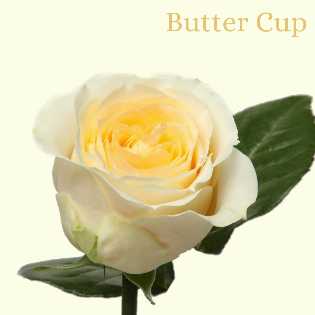 ROSE BUTTER CUP 40