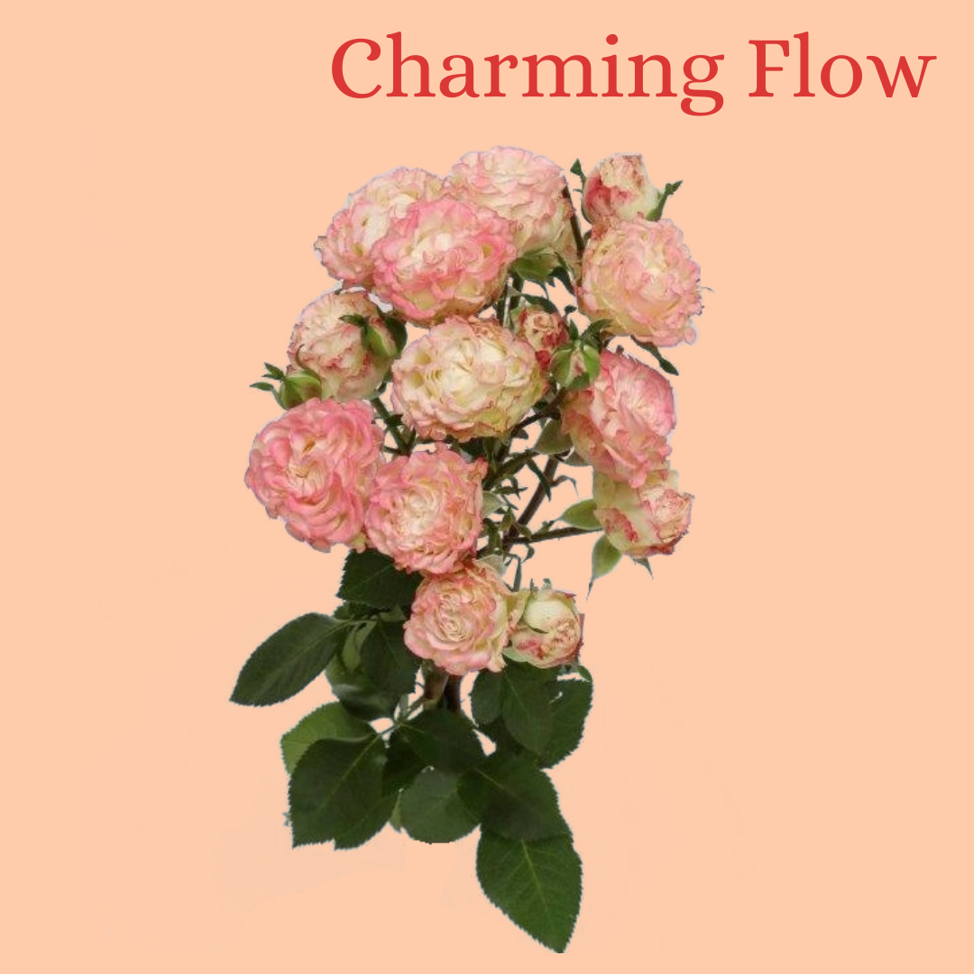 ROSE BR. CHARMING FLOW 40