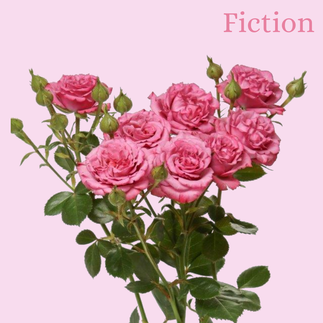 ROSE BR. FICTION 50