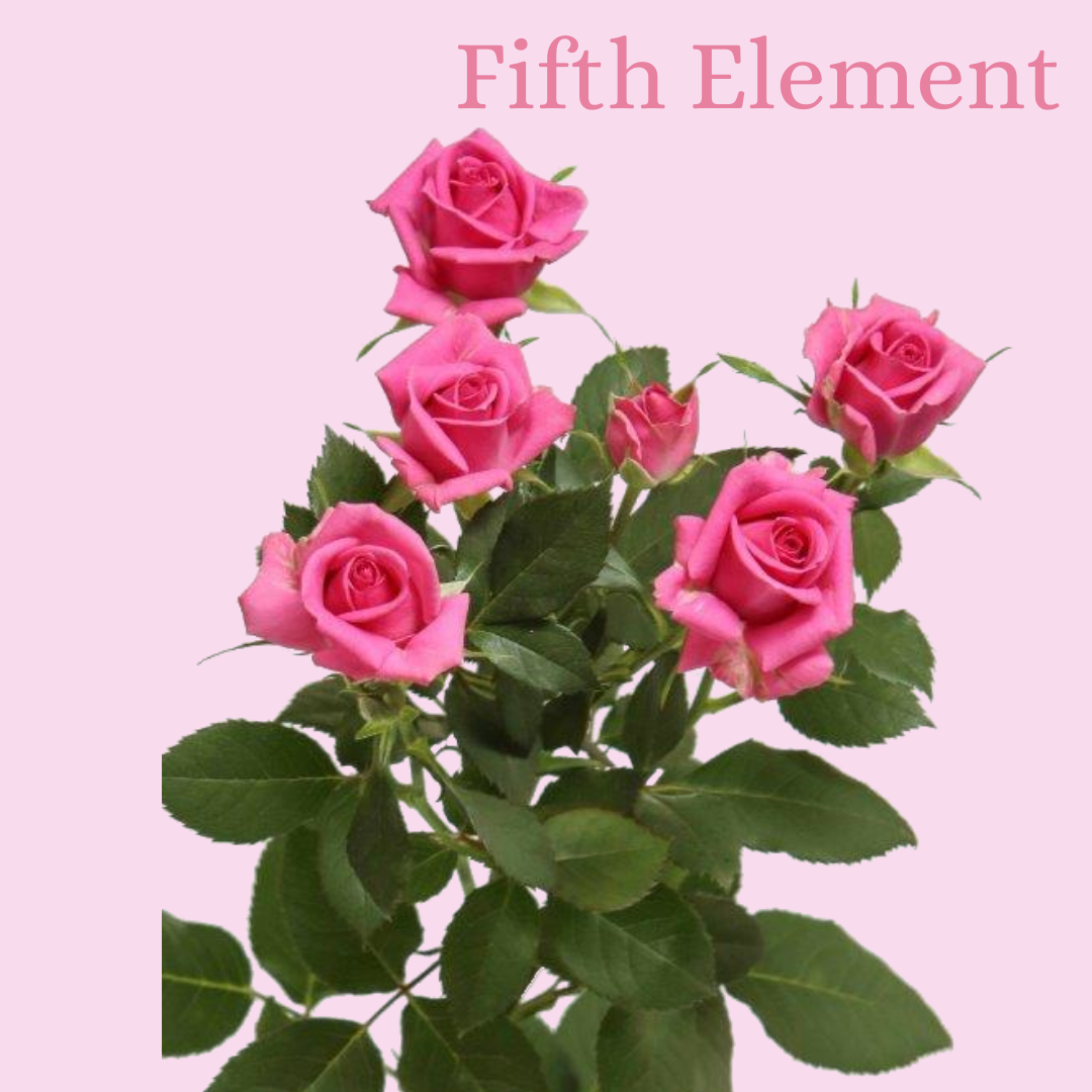 ROSE BR. FIFTH ELEMENT 50