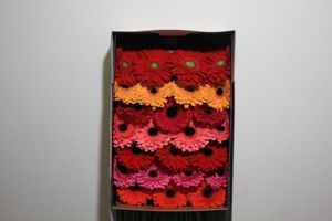 GERBERA MIX  IN BOX 45