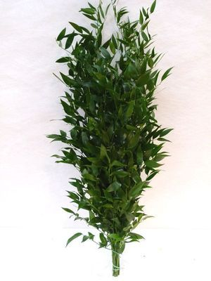 FEUIL. RUSCUS 200grs Italie