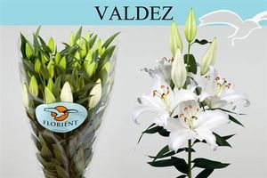 LYS OR VALDEZ 75 4 F+
