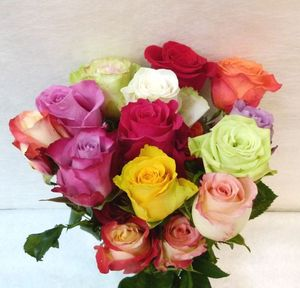 ROSE VARIE BOTTE EQUATEUR 40